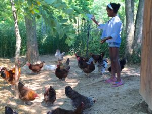 Tezia feeding some of the farm's chickens.